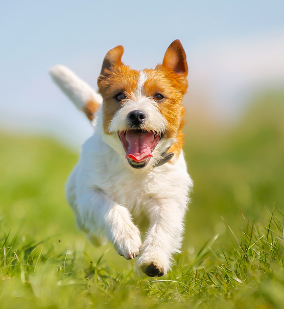 View our Pet Licence page